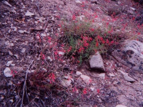 Flowers In Copper Canyon