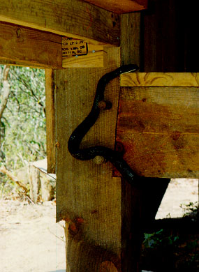 A Black Snake Enters The Plum Orchard Shelter