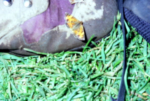 A Butterfly Took Up Residence On My Merrill Boot