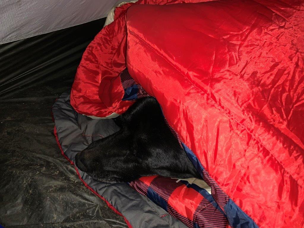 Boone Dawg In Sleeping Bag