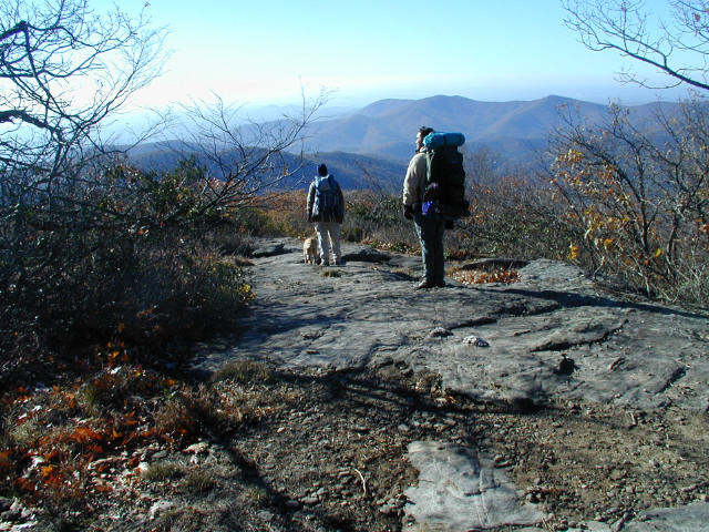 Bears On The Appalachain Trail (At Blood Mountain)
