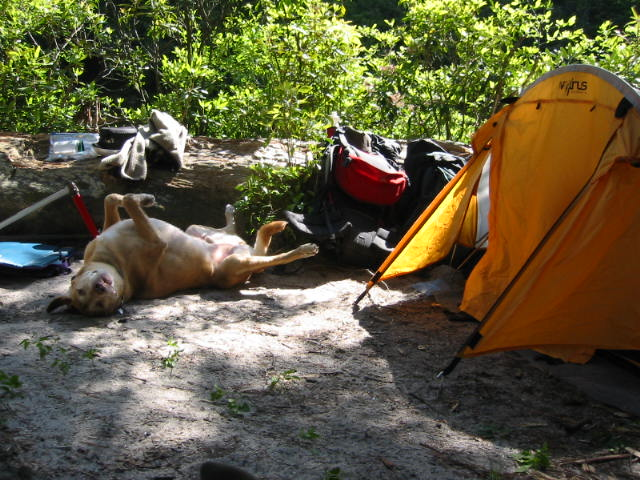 12 Tips To Make Backpacking With Your Dog A Great