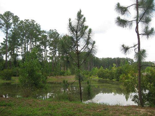 Pond near The Greenway Trail